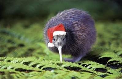 A Very Kiwi Christmas